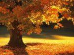Trees soaking up the vitamin D